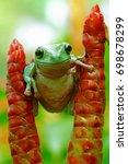 dumpy frog | Shutterstock . vector #698678299