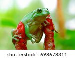 dumpy frog | Shutterstock . vector #698678311