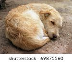 """A sleeping dog """"Canis lupus familiaris"""" in Athens - stock photo"""