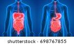 human digestive system anatomy  ... | Shutterstock . vector #698767855