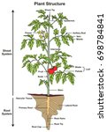 plant structure infographic... | Shutterstock .eps vector #698784841
