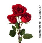 Stock photo three dark red roses isolated on white 69880057