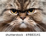 persian cat portrait | Shutterstock . vector #69883141