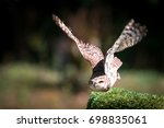 owl that stands out from a... | Shutterstock . vector #698835061