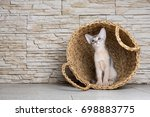 Small photo of Adorable purebred blue abyssinian kitten sitting in the wicker basket in the modern interior with the stone brick wall background. Cute and lovely cat