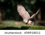 Stock photo owl that stands out from a branch 698918011