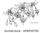 hand drawn and sketch fuchsia... | Shutterstock .eps vector #698950705
