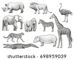 african animals illustration ... | Shutterstock .eps vector #698959039