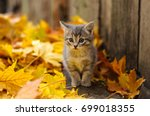 Stock photo cat 699018355