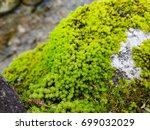 Little Fern Tree On Stone