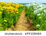 The Flower Fields At Carlsbad...