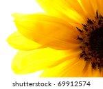 Sunflower Part Close Up...