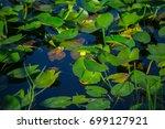 everglades national park....   Shutterstock . vector #699127921