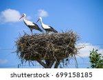 stork's nest  natural stork's... | Shutterstock . vector #699158185