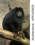 Small photo of Black-howler monkey (Alouatta caraya).
