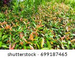 tree nature background | Shutterstock . vector #699187465