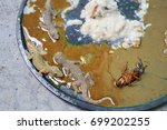 Small photo of Glue trap with lizard and Cockroach closed-up