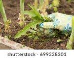 Hand Of Female Gardening...