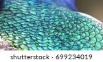 Indian Peacock Feather Pattern