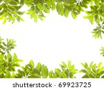 green leaves on white background | Shutterstock . vector #69923725
