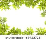 green leaves on white background   Shutterstock . vector #69923725