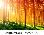 Colorful mystical forest with sun ray at morning - stock photo