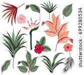 beautiful hand drawn botanical... | Shutterstock .eps vector #699280534