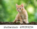 Stock photo adorable red kitten posing outdoors in summer 699293254