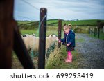 A Young Girl Feeds The Sheep O...