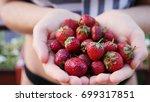 holding fresh strawberry in... | Shutterstock . vector #699317851