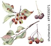 watercolor floral set. floral... | Shutterstock . vector #699335071