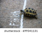 Small photo of turtle races finish