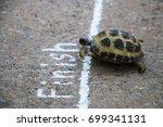 Turtle races finish