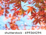 Red Maple Leaves In Autumn...