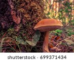 mushrooms in the russian forest | Shutterstock . vector #699371434