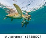 Small photo of Snorkeling woman with hawksbill turtle, underwater photography. Travel lifestyle, water sport outdoor activities, swimming and snorkeling on summer beach holidays.