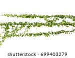plants ivy. vines on poles on... | Shutterstock . vector #699403279