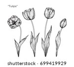 hand drawn and sketch tulips... | Shutterstock .eps vector #699419929