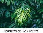 Tropical Green Leaves On Dark...