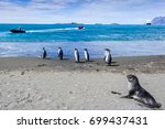 seal and group of penguins in... | Shutterstock . vector #699437431