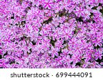 Carpet With Masses Of Pink Sta...