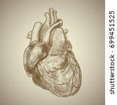 human heart. exterior... | Shutterstock .eps vector #699451525