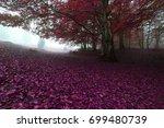 beautiful autumn sunrise... | Shutterstock . vector #699480739
