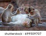 Stock photo monkeys love 699509707