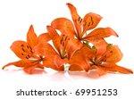 Orange Lily Isolated On White...