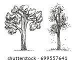 trees autumn hand drawing... | Shutterstock .eps vector #699557641