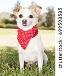 chihuahua park portraits   Shutterstock . vector #699598585