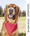 golden retriever park portrait    Shutterstock . vector #699601351