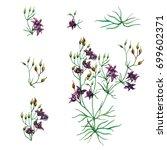set. flowering herb with purple ... | Shutterstock . vector #699602371