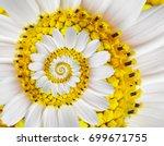 white yellow camomile daisy... | Shutterstock . vector #699671755